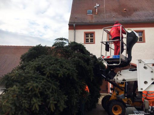 Weihnachtsbäume in Finsterwalde